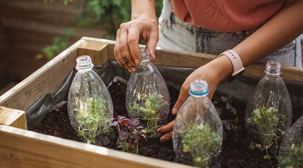 Someone uses litre bottles while gardening as a way to start plants off in a mini-greenhouse